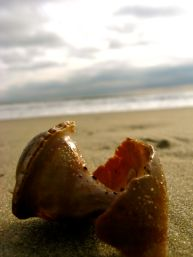 beached shell