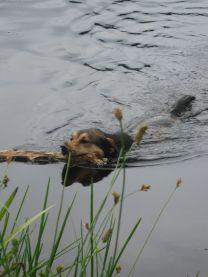 loki in water