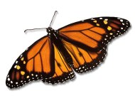 credit monarch-butterfly.info