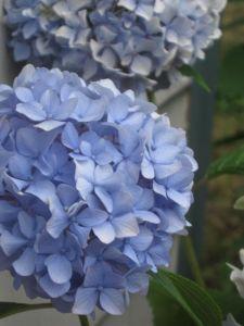 Last blue of summer