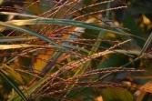 red grasses - jhester