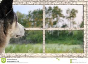 dog-looking-window-grassy-landscape-56928264