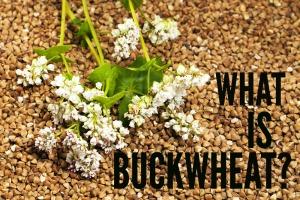 BuckwheatTXT